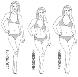3 Body types - ectomorph, mesomorph and endomorph